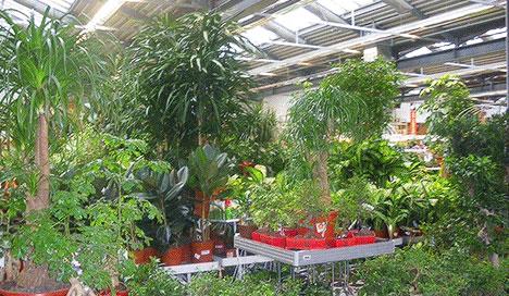 Сад огород на красносельской